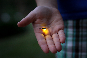 lightning bug in hand